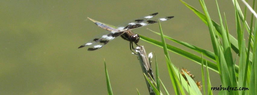 a dragonfly on a leaf.