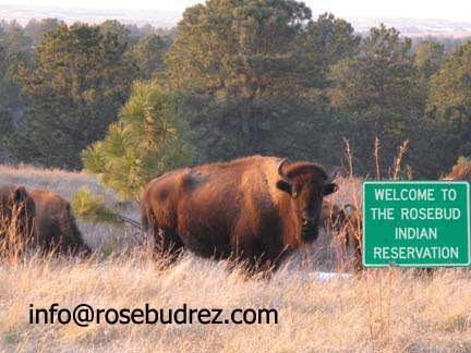 buffalo on the Rosebud
